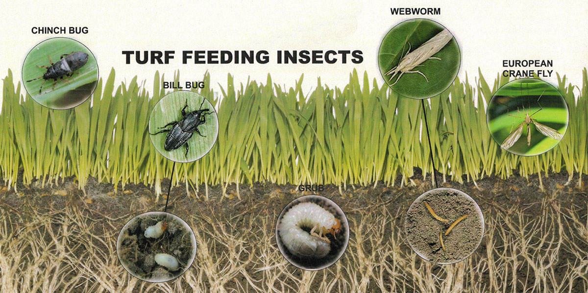 Turf Insect Control Warner Landscape